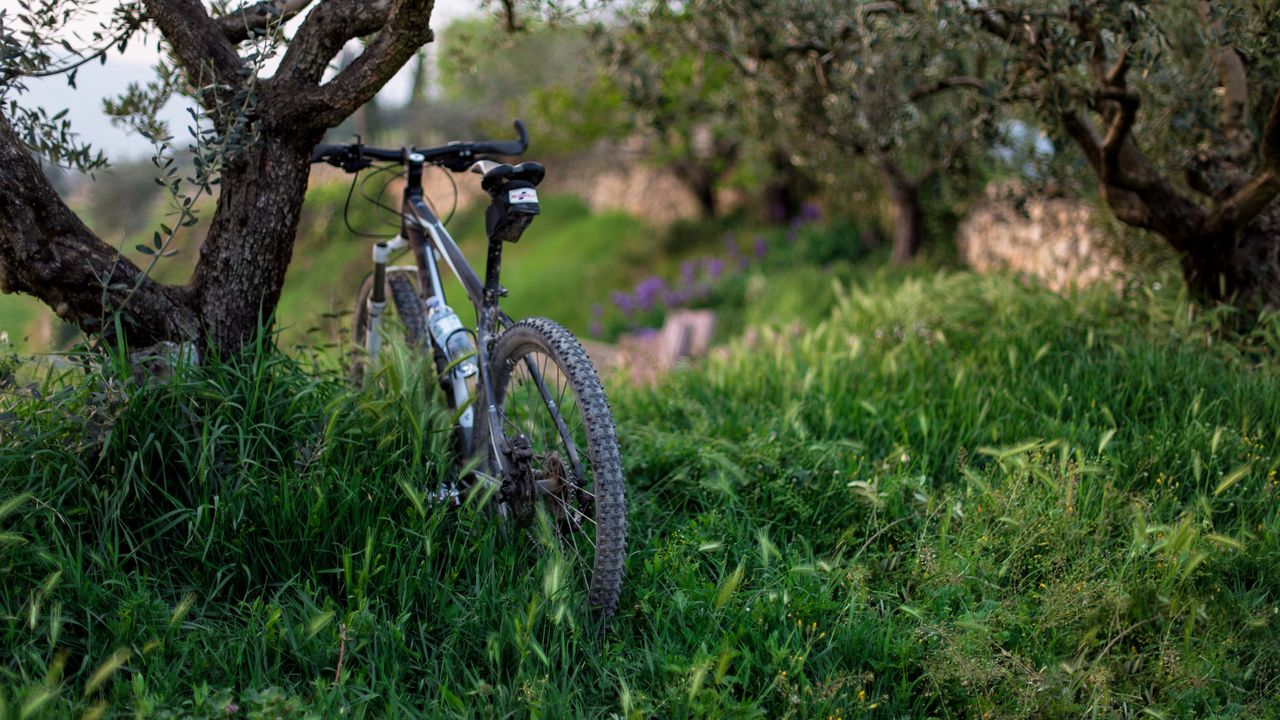 Wallpaper bicycle, grass, trees