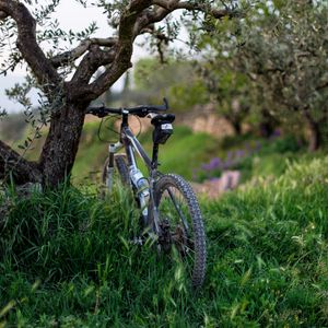 Preview wallpaper bicycle, grass, trees