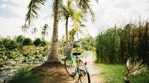 Preview wallpaper bicycle, palm trees, tropics, sunlight