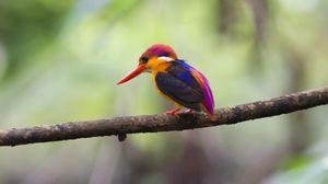 Preview wallpaper bird, beak, branch