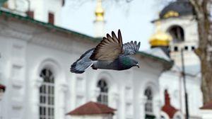 Preview wallpaper bird, blue, flight, church, chapel