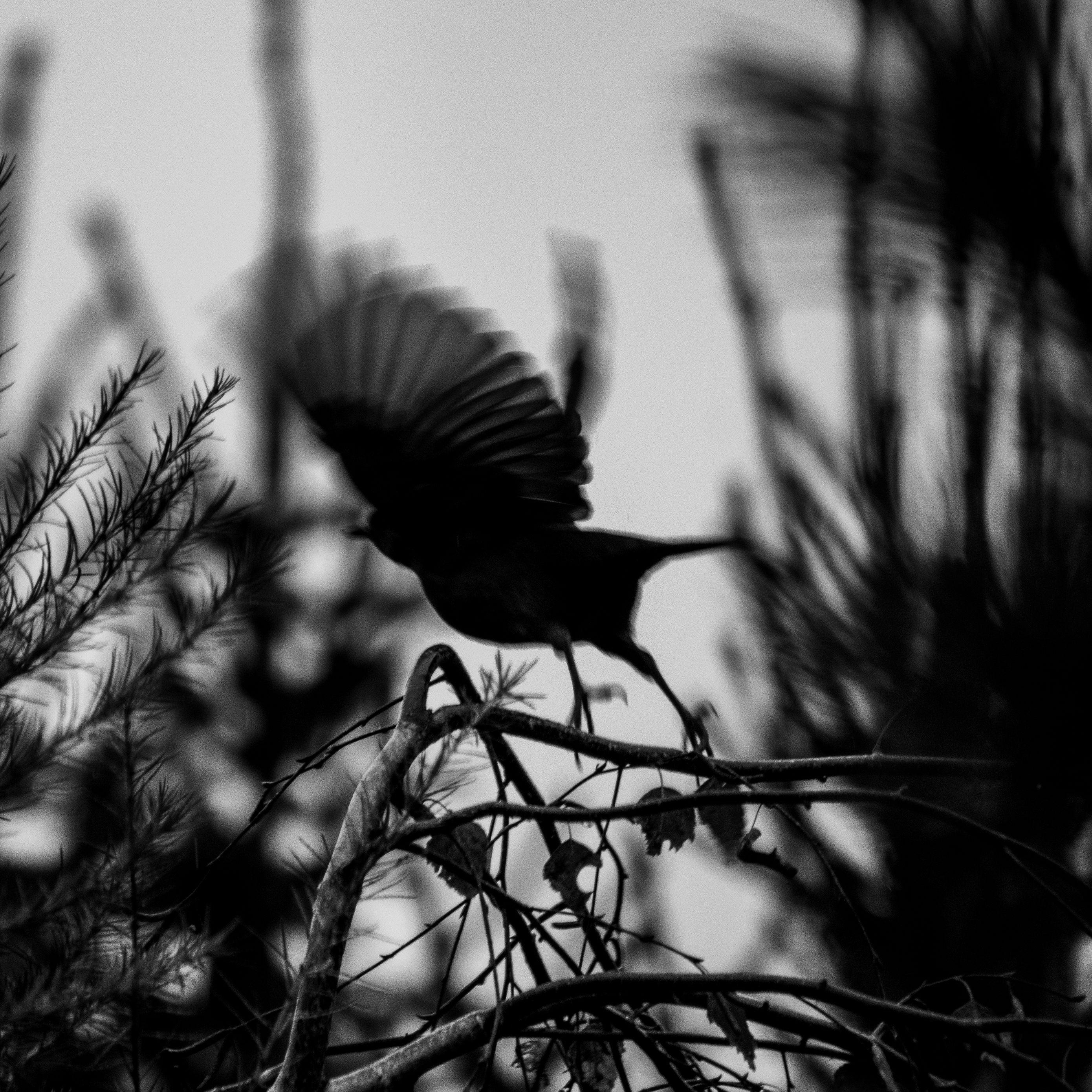 2780x2780 Wallpaper bird, branch, bw, silhouette, dark, flight