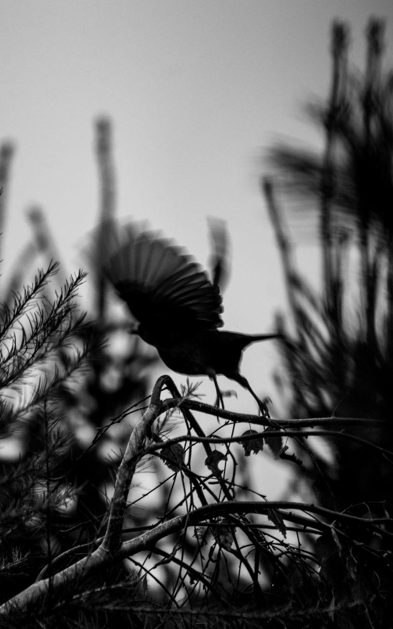 800x1280 Wallpaper bird, branch, bw, silhouette, dark, flight