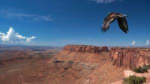 Preview wallpaper bird, cliff, predator, flight