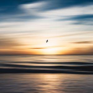 Preview wallpaper bird, flight, ocean, water, minimalism