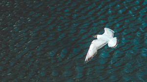 Preview wallpaper bird, flight, river, wings