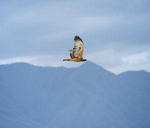 Preview wallpaper bird, flight, sky, wildlife