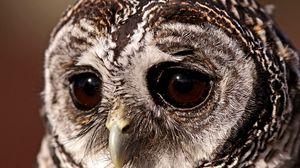 Preview wallpaper bird, owl, sad eyes, owl eyes