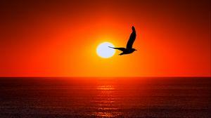 Preview wallpaper bird, silhouette, sun, sea, sky