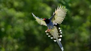 Preview wallpaper bird, wings, bokeh, background