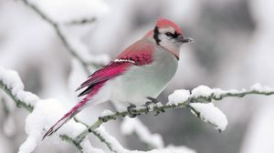 Preview wallpaper bird, winter, snow, branch, nature