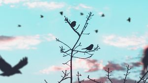 Preview wallpaper birds, branches, silhouette, sky