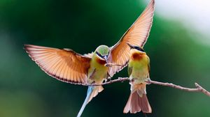 Preview wallpaper birds, couple, branch, wings, flap