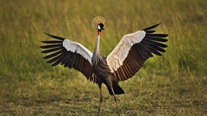 Preview wallpaper birds, cranes, grass, feathers, color