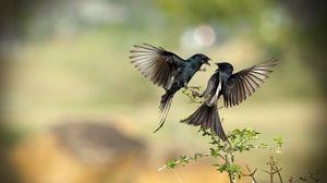 Preview wallpaper birds, flight, fight, branches