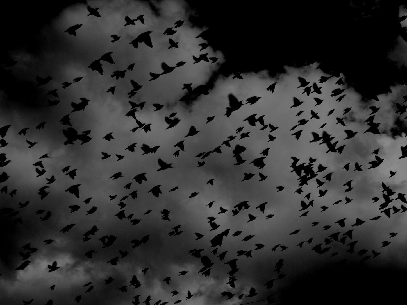 1400x1050 Wallpaper birds, flock, dark, clouds, sky