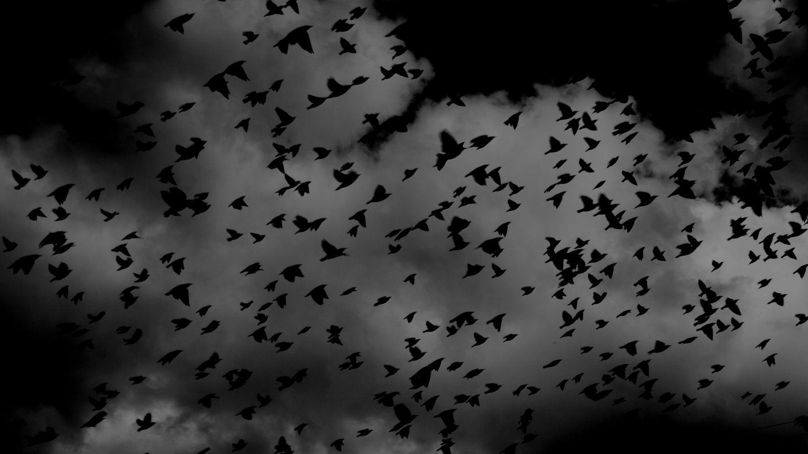 1600x900 Wallpaper birds, flock, dark, clouds, sky