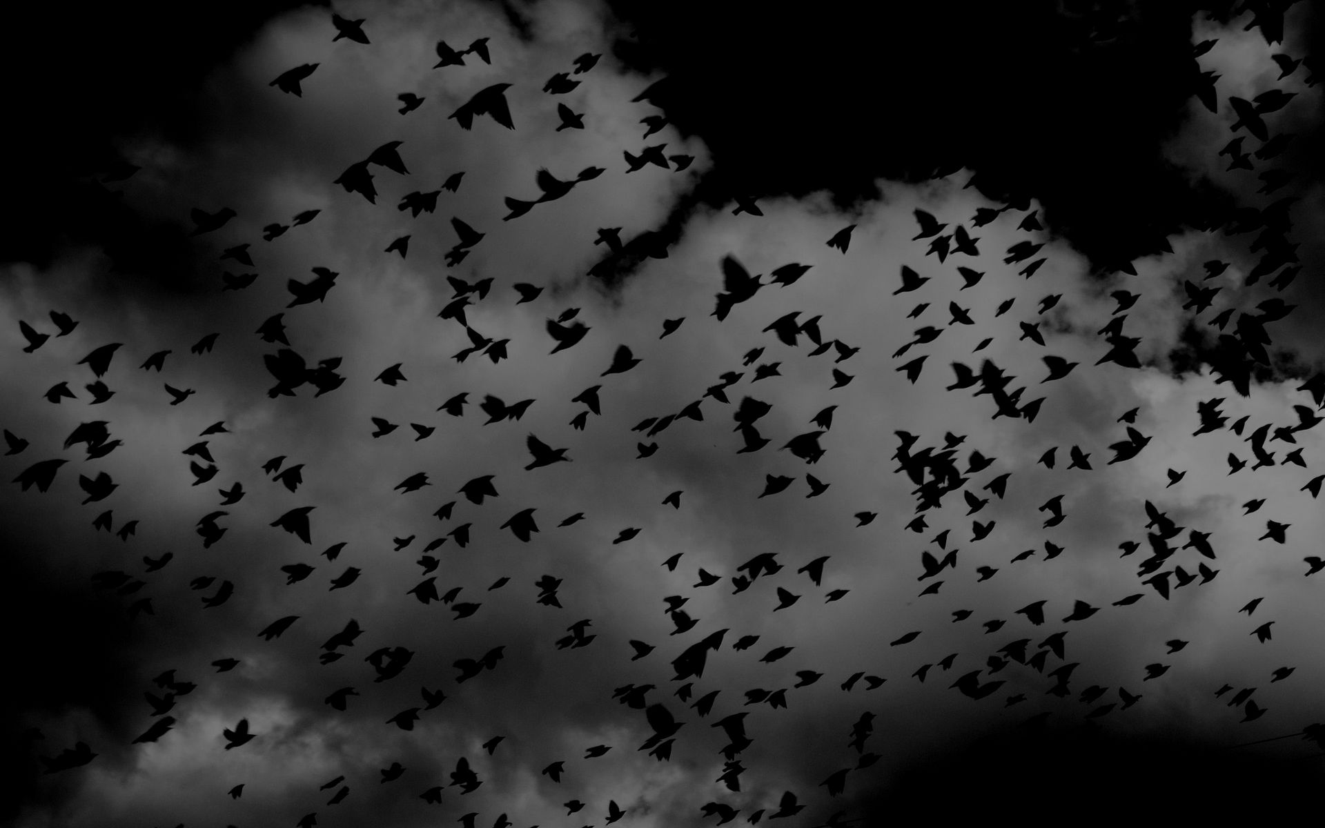 1920x1200 Wallpaper birds, flock, dark, clouds, sky