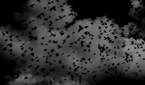 Preview wallpaper birds, flock, dark, clouds, sky