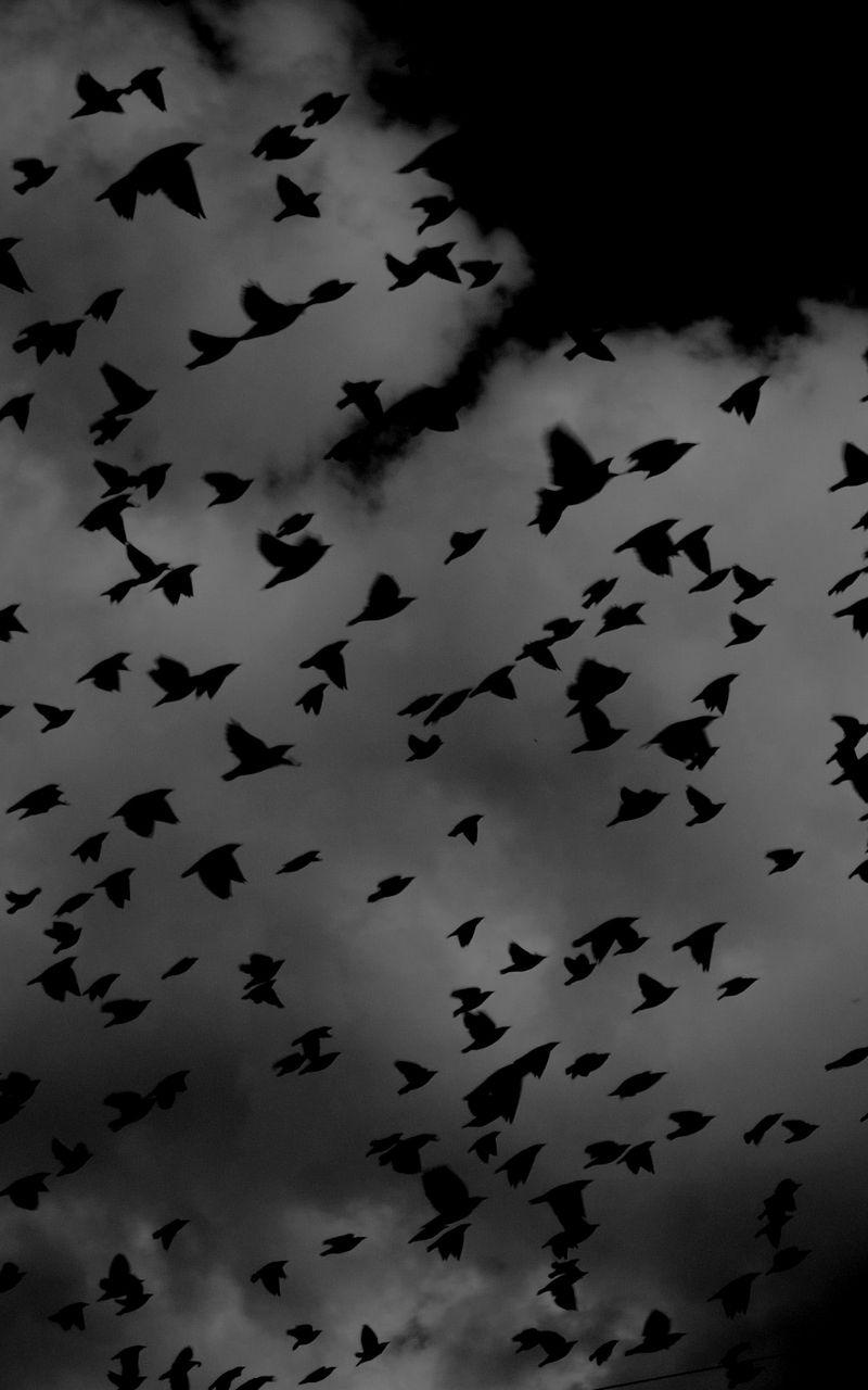 800x1280 Wallpaper birds, flock, dark, clouds, sky