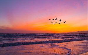 Preview wallpaper birds, flock, sunset, beach