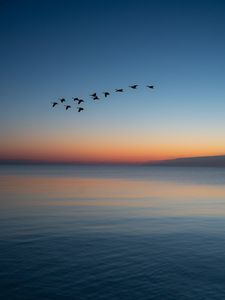 Preview wallpaper birds, flock, sunset, twilight, water