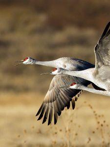 Preview wallpaper birds, flock, trio, flight, storks