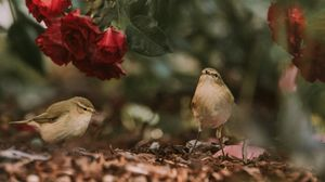 Preview wallpaper birds, flowers, red, roses