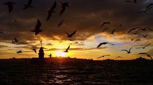 Preview wallpaper birds, sea, flying, night