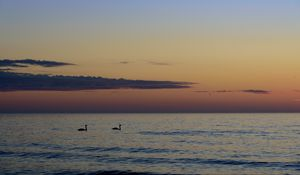 Preview wallpaper swans, birds, silhouettes, sea, water, sunset