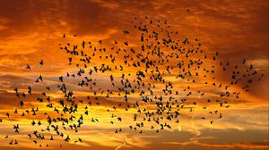 Preview wallpaper birds, silhouettes, sky, flight, sunset, clouds