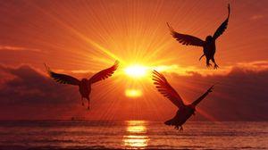 Preview wallpaper birds, silhouettes, sunrise, sea