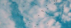 Preview wallpaper birds, flock, sky, clouds