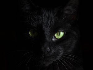 Preview wallpaper black cat, muzzle, look