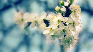 Preview wallpaper blossom, branch, bud, spring, close-up
