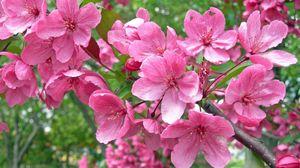 Preview wallpaper blossom, branch, garden, spring, mood