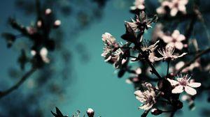 Preview wallpaper blossom, branch, spring, awakening