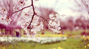 Preview wallpaper blossom, branch, spring, sharpen, blur
