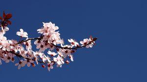 Preview wallpaper blossom, branch, spring, sky, blue