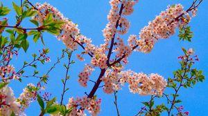 Preview wallpaper blossom, branch, spring, sky, foliage