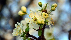 Preview wallpaper blossom, cherry, spring, branch