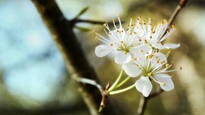 Preview wallpaper blossom, spring, branch, trio, white