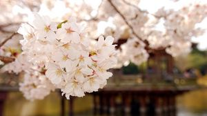 Preview wallpaper blossom, spring, garden, pond, water, branches
