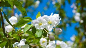 Preview wallpaper blossom, spring, sunny, mood, greens