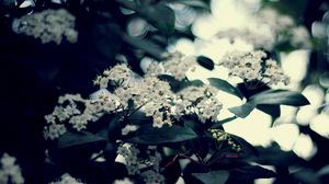 Preview wallpaper blossom, twig, leaves, bunches