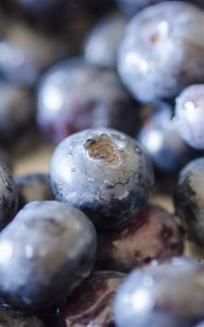 Preview wallpaper blueberries, berries, fruits, drops, macro