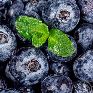 Preview wallpaper blueberries, berries, mint, wet, macro