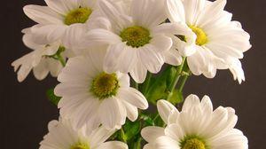 Preview wallpaper bouquet, flowers, petals, white
