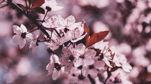 Preview wallpaper branch, bloom, flowers, spring, blur