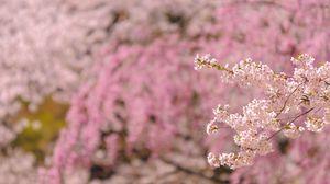 Preview wallpaper branch, bloom, spring